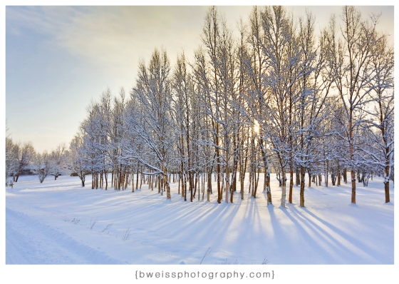 B-Weiss_Photography_pocket of sunshine-Alaska_Winter_photo